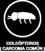 carcoma-comun-argi