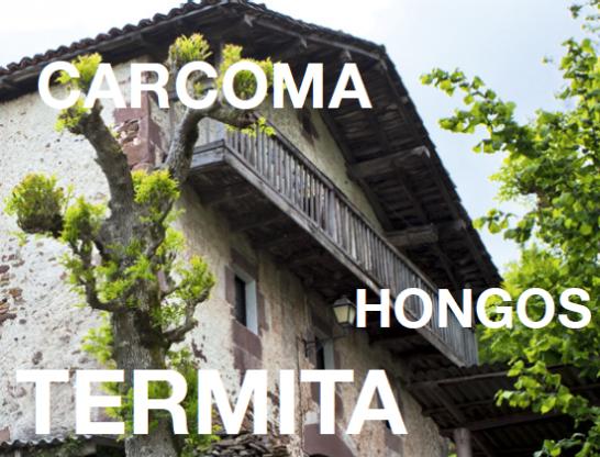 carcoma-hongos-termita-argi-letras
